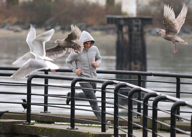 Biegnący Grey i uciekające mewy - klasyczne filmowe ujęcie