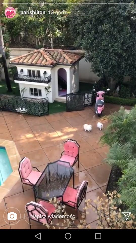 W głowie się nie mieści w jakich LUKSUSACH żyją psy Paris Hilton