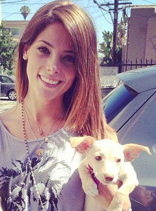 Ashley Greene przygarnęła dwa psiaki (FOTO)