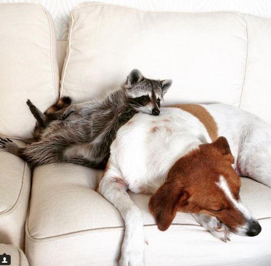 Jeszcze niedawno śledząc karierę zwierząt w sieci, twierdziliśmy, że by zarobić miliony w internecie trzeba mieć kota i aparat.