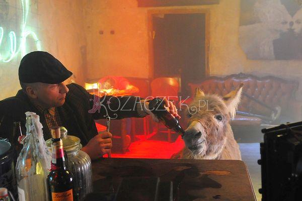 W ich teledysku osioł będzie pił piwo (FOTO)