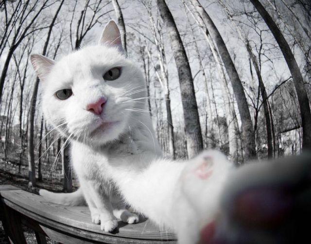 Nowa moda – Kocie selfie w sieci