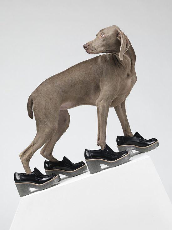 Widzieliście coś takiego? Psy zamiast modelek! (FOTO)