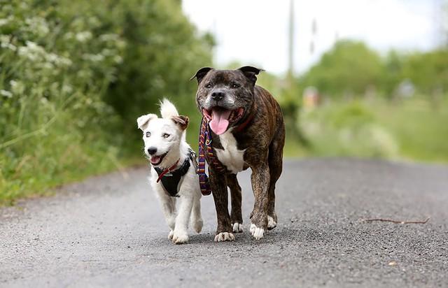 �lepy pies i jego najlepszy przyjaciel wyciskaj� �zy