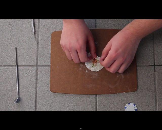 Malusi chomik wcina malusie burrito [VIDEO]