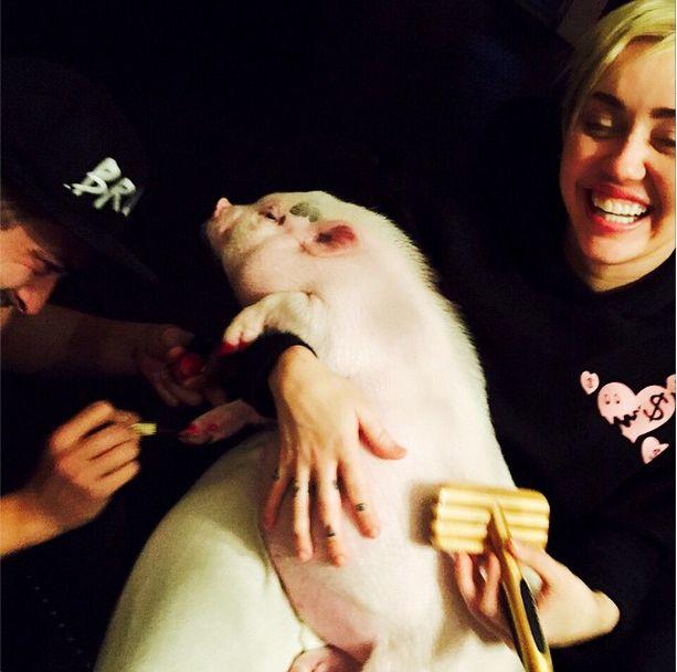 Miley Cyrus i jej świnka