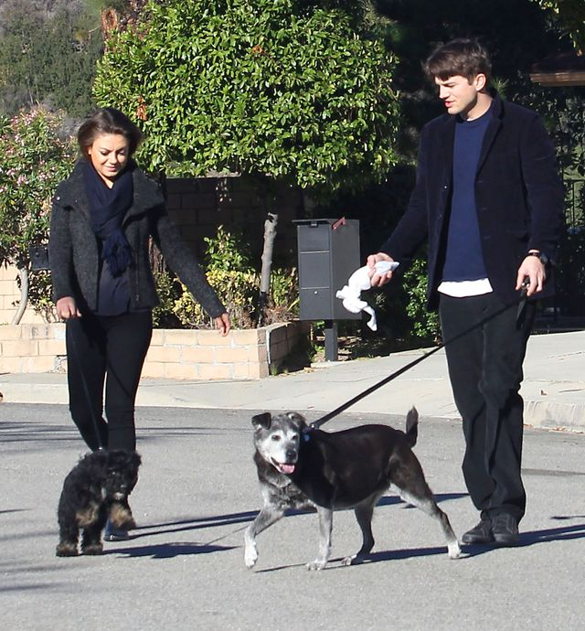 Mila Kunis i Ashton Kutcher ZARĘCZYLI SIĘ!
