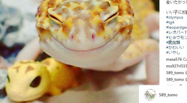 Uśmiechnięty gekon ze swą zabawką podbija internet (Instagram)