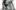 Kellan Lutz i trzech innych wspaniałych prężą torsy (FOTO)