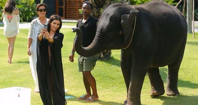 Słoń zrobił Kim Kardashian Prima Aprilis (FOTO)