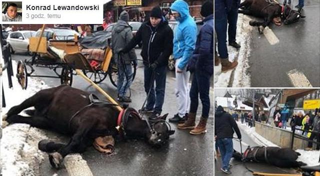 Przestraszony koń taranował Krupówki, karetka zabrała małego chłopca