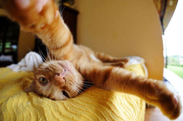 Koty też robią sobie selfie! (FOTO)