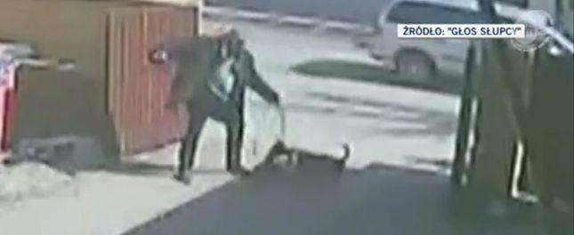 Mężczyzna z pit bullem zakatowali ciężarną kotkę (FOTO)