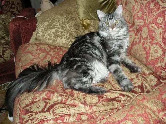 Maryla Rodowicz pokazała swoje koty