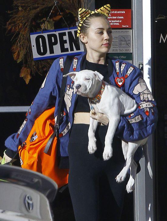To dowód na to, że Miley Cyrus znęca się nad psem? (Insta)