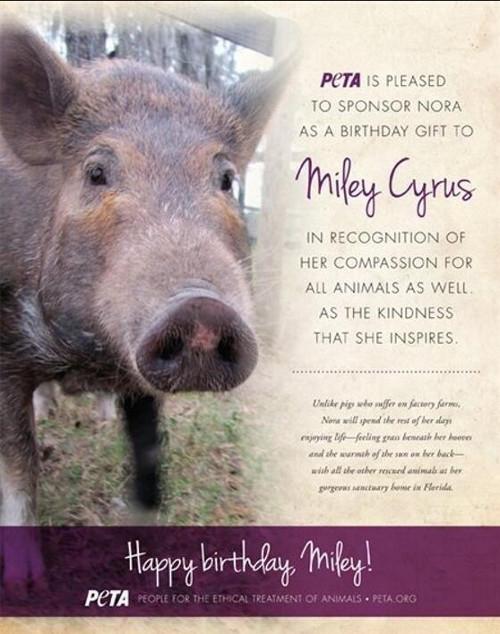 Kto podłożył Miley Cyrus świnię?