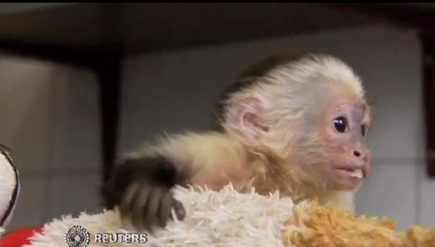 Policja zabrała Bieberowi jego małpkę (FOTO)