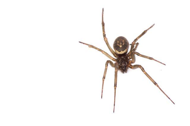 Przerażeni Brytyjczycy wrzucają do sieci zdjęcia pająków w domach