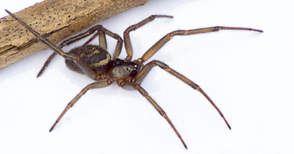 Przerażeni Brytyjczycy wrzucają do sieci zdjęcia pająków w