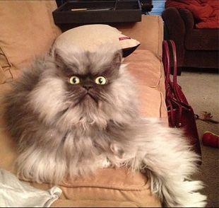 Nie żyje Pułkownik Miau – najbardziej zniesmaczony kot sieci