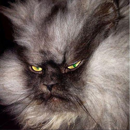 Nie żyje Pułkownik Miau - najbardziej zniesmaczony kot sieci