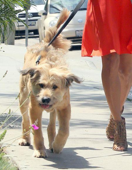 Kto chodzi na spacery z takim psiakiem? (FOTO)