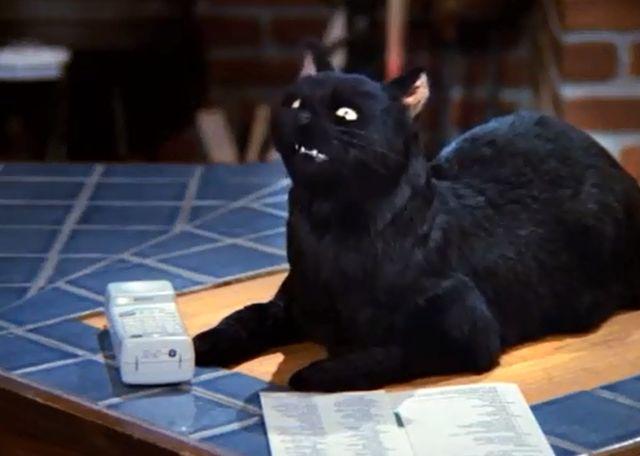 Melissa Joan Hart znienawidziła koty przez Salema