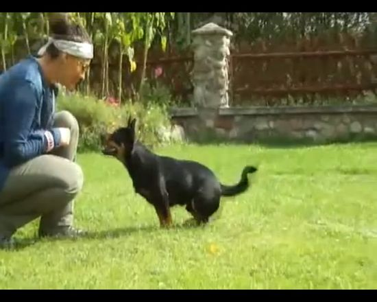 Zobaczcie, jak Sara May wyszkoliła swojego psa! VIDEO