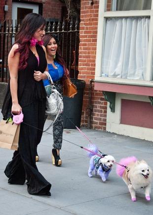 PETA krytykuje Snooki za farbowanie sierści psom