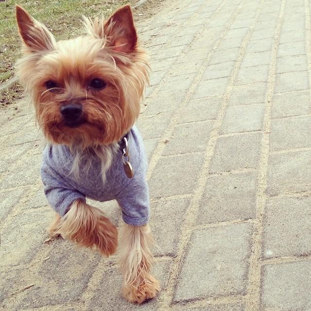 Psy Wolińskiego noszą ciuchy od Barka Jacobsa (FOTO)
