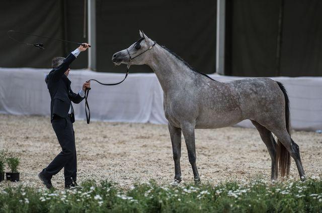 Rzeczpospolita: Ktoś TRUJE konie z Janowa?!