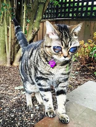 Matilda Cat
