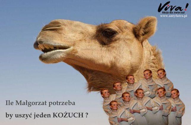 Wielbłąd w kożuchu z Małgorzat Kożuchowskich (FOTO)
