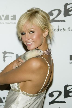 Paris Hilton w bikini
