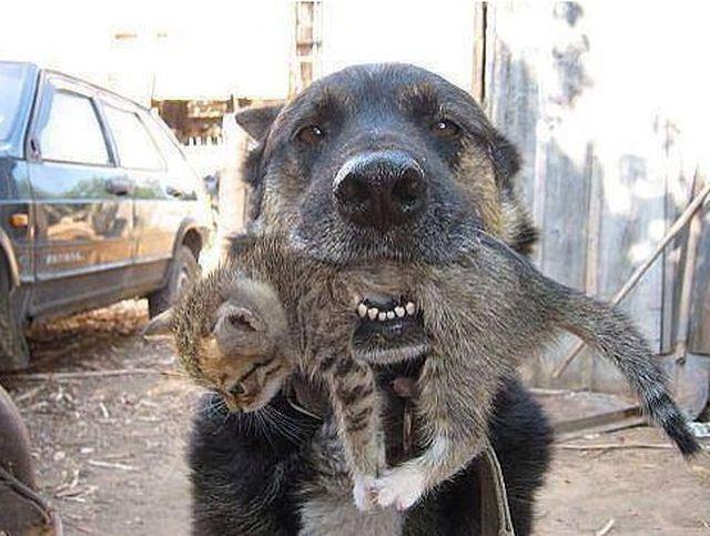 Ten pies to BOHATER! To co zrobił wzrusza do łez!