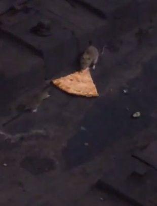 pizzarat