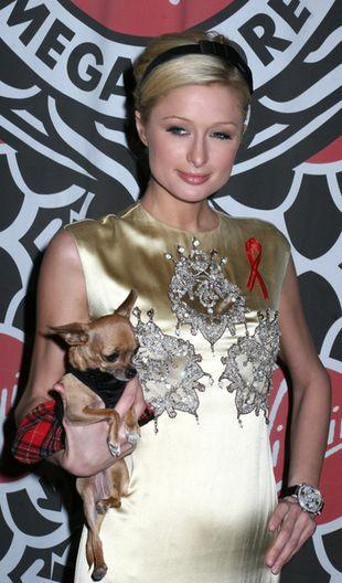 Paris Hilton odpowiedzialna za porzucone psy