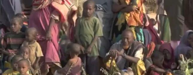 Polscy artyści śpiewają dla głodującej Afryki [VIDEO]