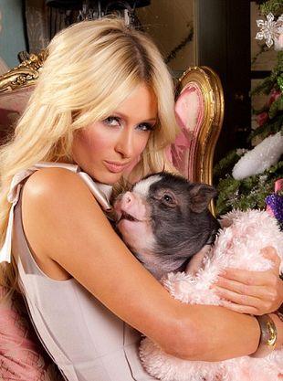 Paris Hilton - świński lans (FOTO)