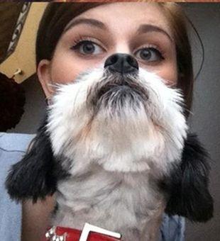 Moda na brodę z kota lub psa (FOTO)
