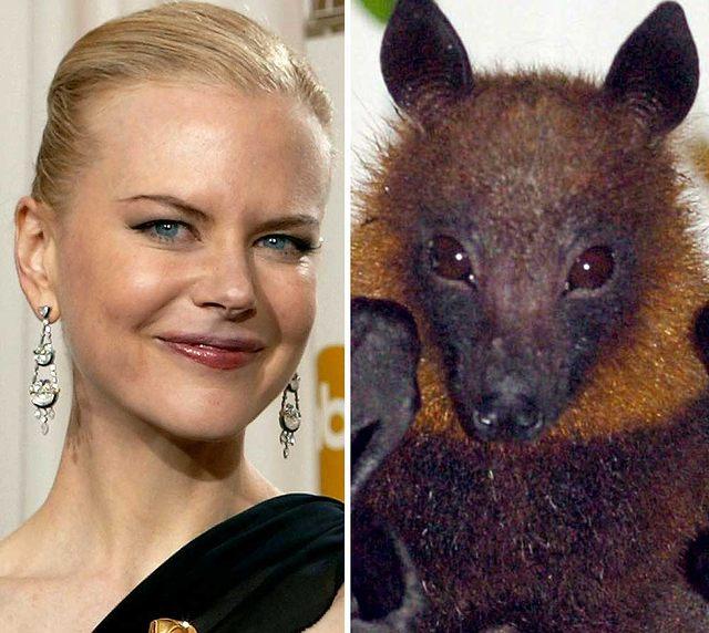 Nicole Kidman wygląda jak nietoperz (FOTO)