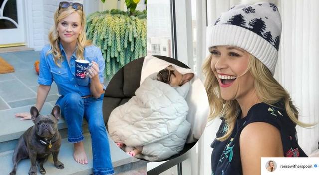 Resse Witherspoon wyśmiewa się z PSA! A podobno kocha zwierzęta…