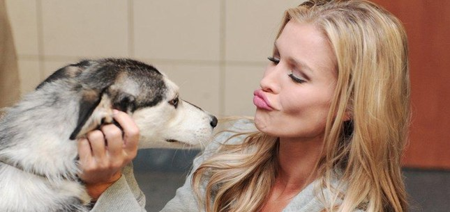 Joanna Krupa rozwozi psy ze schroniska (FOTO)