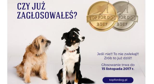 Konkurs TOP FOR DOG 2017 – zapraszamy do głosowania w 4. edycji