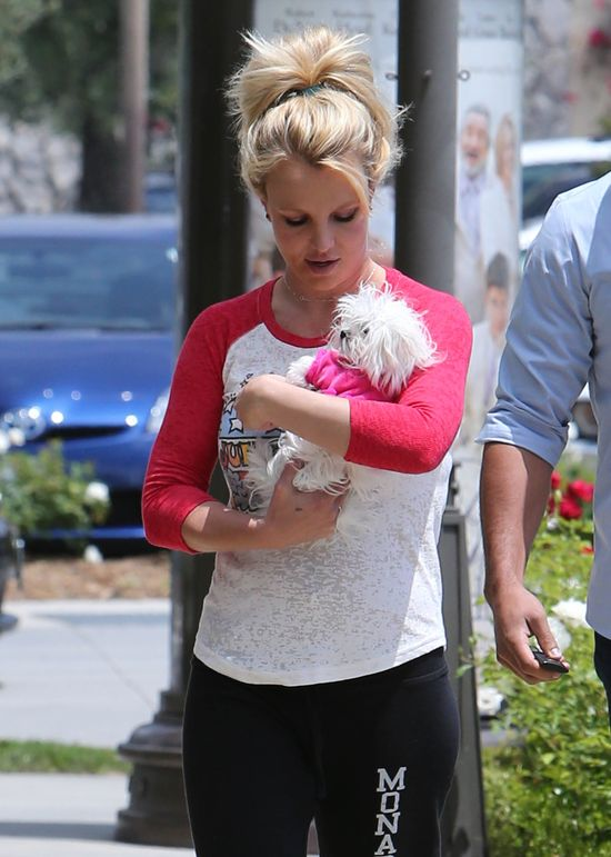 Po tym niusie zaczniesz zazdrościć psom Britney Spears