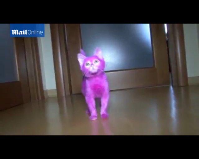 Zafarbowany na różowo kociak zdechł [VIDEO]