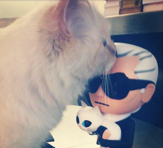 Ile niań ma Choupette, kotka Karla Lagerfelda?