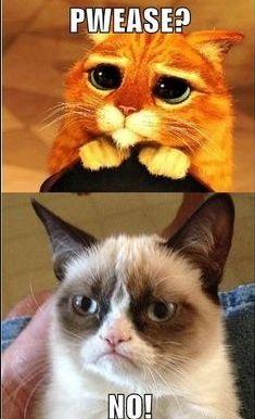 Hit! Kot ze Shreka istnieje w realu! (Instagram)