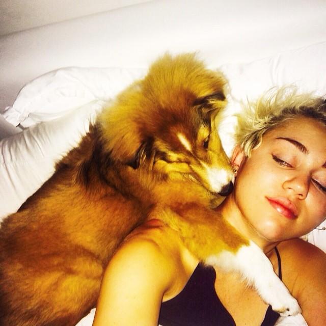 Miley Cyrus śpi z psami (FOTO)