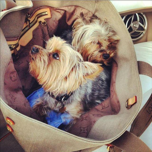 Który polski gwiazdor wozi psy w torbie Louis Vuitton?